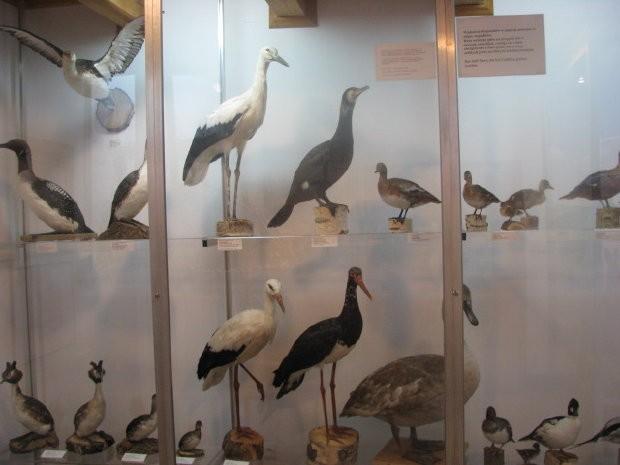 MuzeumPrzyrodnicze3