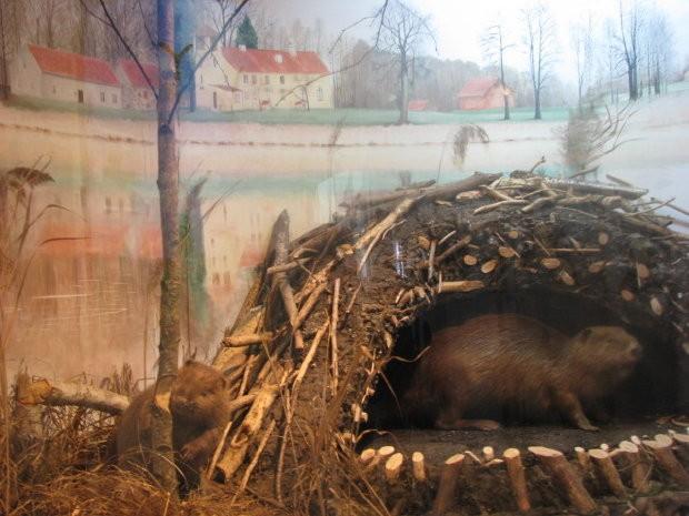 MuzeumPrzyrodnicze4